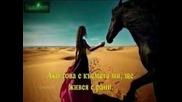 (арабско) Нанси Ажрам - Ако това е любов горко ми