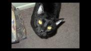 Говорещо котенце (събуди се котенце) 4 част