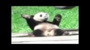 fun panda dance