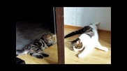 Cats and Kittens Playing together