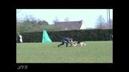 Тренировка на служебна Немска Овчарка