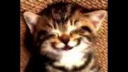 Коте пее честит рожден ден!