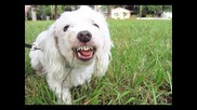 Dog Eats Poop! (10/18/11)