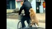 Това куче изуми всички с таланта си