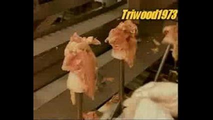 Как се правят пилешките изделия !!!