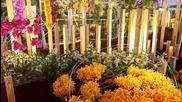 Expozitie Orhidee 2013 Partea Intai