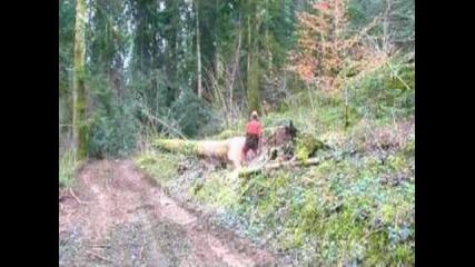 Logging in Jura, Stihl Ms 460/.abattage et fa