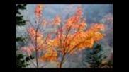 Сакура- Японска народна музика