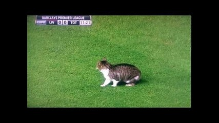 Черната котка на Анфилд при 0:0 между Ливърпул и Тотнам