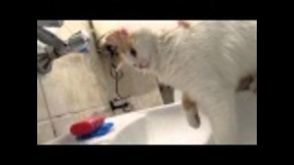 Сладко коте пие вода от чешмата!