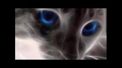 Nina Simone - i put a spell on you _превод_