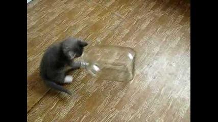 котка си играе с боркан 1