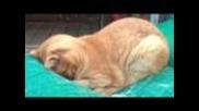 Котешка молитва
