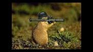 Funny Army Squirrels