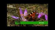 Animal Planet-wild France (дивата Франция) реклама