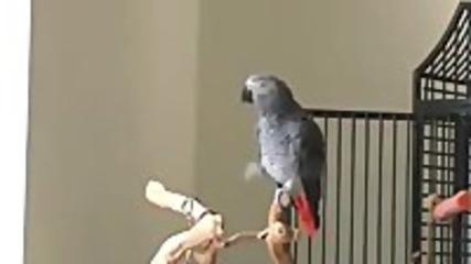 пеещ и танцуващ папагал