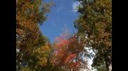 Цветовете на есента и музика от Моцарт