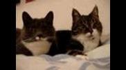 Две котета си говорят