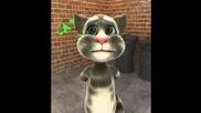 Funny Cat sing tacata