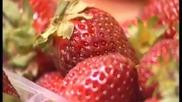 Как ни тровят с зеленчуци и плодове?