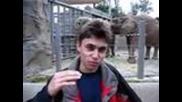 Първото качено видео в Youtube - Me at the zoo