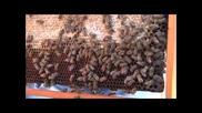 Все повече млади хора стават пчелари