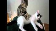 Котки си правят масаж