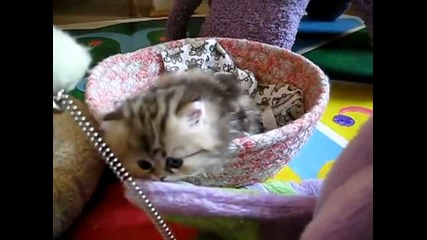 Много сладко малко котенце