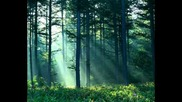 Forest and Nature Sounds 10 Hours