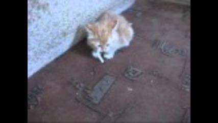 котето и цигарата