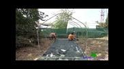 Парници за градината от полиетилен. Тунели за зеленчуци.