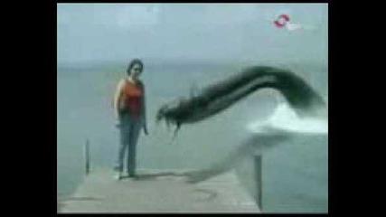 Морско чудовище изяжда куче