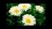 Desislava - Sestra brata kani