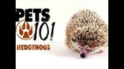 Pets 101 - Hedgehogs