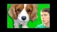 Cute Talking Puppy!!