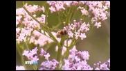 Rtg Tv Природа Башкирии 2011