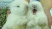 Incredibly Cute Cuddly Furry Rabbits Kissing and Cudling!