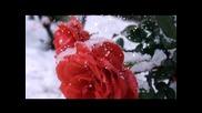 Salvatore Adamo - Cae la nieve