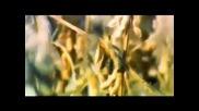 Пища Богов: бобы, фасоль, бобовые № 21 (04.06.2013)