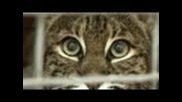 Bellona the Bionic Bobcat!