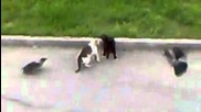Котки,скорост и прецизност!