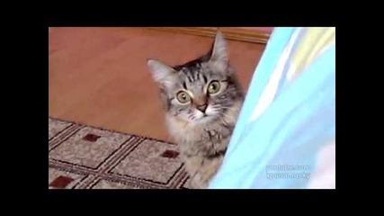 Страшната котка