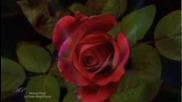 La Rose Magnifique - Elixir d'amour- Michel Pepe(relaxing Music)