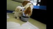 Cat Vs Dog ( really funny )