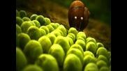 Крошечные существа - Частная жизнь насекомых - 2часть