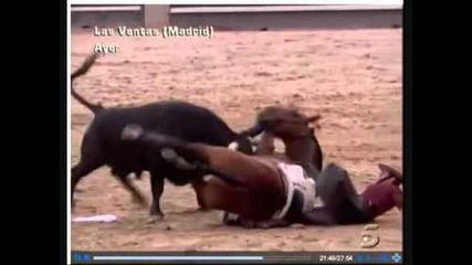 Най-силното Животно-бикът