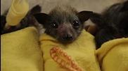 Baby Bat Burritos