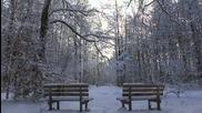 Wintermarchen im Spandauer Forst