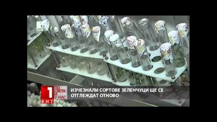 Възстановяват изчезнали сортове български зеленчуци
