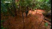 Градът на мравките Как милиони прости създания съставят общ мозък, вземат решения и се движат